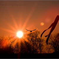 An Indiana Sunset bird flying toward the sun by HConwayPhotography