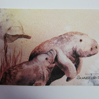 Manatees Mother's Love ACEO watercolor print 411 pink peach Florida