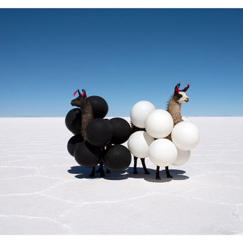 Gray Malin, Llamas Black/White Balloons, Photographs