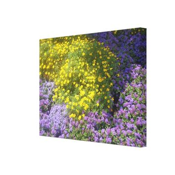 Yellow Purple Flowers in Sunlight Floral Nature Canvas Print