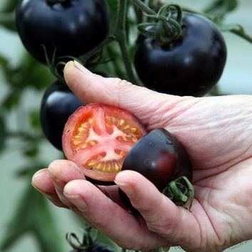 100 Rare Organic Black Tomato Cherry Seeds Tasty Nutritive Heirloom Vegetable Fruit Seed Home Garden Decor Plants Grow