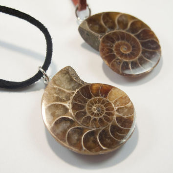 Ammonite Necklace Real Ammonite Pendant Fossil Paleontology Jewelry