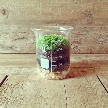 Mother's Day Gift // Moss Terrarium - Home Decor - Office Decor - Science & Garden (250ml)