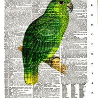 Mealy Amazon Parrot - Bird - Vintage Dictionary Art Print - Print Size, 8x10,Page Size 8.5x11