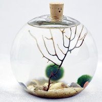 Bubble Terrarium Natural - Marimo - Japanese Moss Ball Aquarium - cork topped glass vase  - sea fan - shells