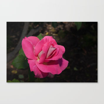 Bon-Bon Rose Canvas Print by Glenn Franco Simmons