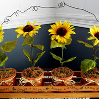Sunflower's In Handmade Wood Carrier / Wood Crate Sunflowers / Window Sill Box / Summer Garden Box / Yellow White Orange Sunflowers / Garden
