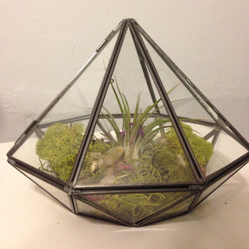 Geometric Glass Diamond Terrarium