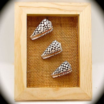 "Wall art -Seashell Art- Coastal Decor- Seashell Shadow Box Cone Shells (Conus Marmoreus) Beautiful Real Shells 9.25"" tall 7.25 across x1.75"""