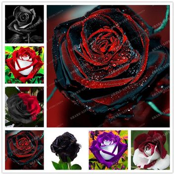 50PCS Rare Rose Seeds Black Rose Flower With Red Edge Rare Rose Flowers Seeds For Garden Bonsai Planting home garden plant