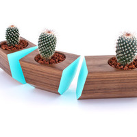 Boxcar Succulent Planters - Solid Walnut with Robin Egg Blue