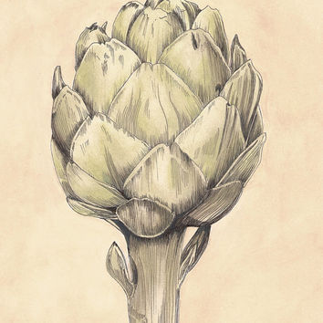 French Artichoke I Botanical Digital Download Print - Vintage Look 8x10 - Inspired by Country Living in France