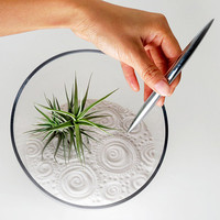 Air Plant Zen Garden (White) -- Discounted