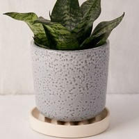 """Parker 6"""" Planter + Drainage Tray Set 