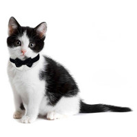 Platinum Pets Formal Cat Bow Tie Collar - Cat - Boutique - PetSmart