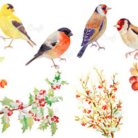 Digital watercolour birds - american goldfinch, bullfinch, gold finch and berries in snow instant download (set4)