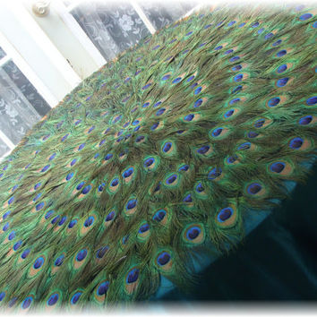 """Peacock Feather Tablecloth Mat  42"""""""