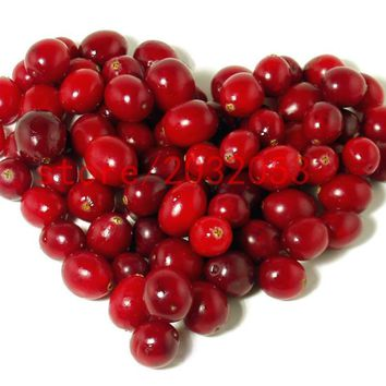 Hawthorn seeds 20 pcs like cherry  no-gmo fruit and vegetable seeds for home garden planting