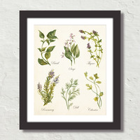 Watercolor Botanical Herbs Giclee Canvas Print