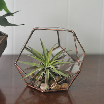 NEW Calix Terrarium Kit, small half dodecahedron glass terrarium -- stained glass -- copper or silver color -- eco friendly