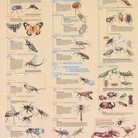 Insect Identification Bugs Education Poster 24x36