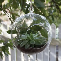 Syndicate Sales Round Terrarium Hanging Planter
