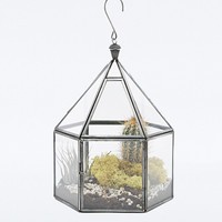 Urban Grow Hexagonal Terrarium - Urban Outfitters
