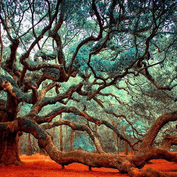 Charleston SC Art- Dreamy Angel Oak Tree  Photography, Charleston SC Photos, Landscape Photos of South Carolina