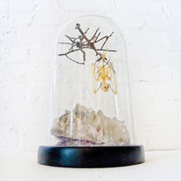 Real Bat Skeleton Hanging Over Smokey Quartz Cluster Stone in Glass Dome