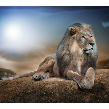 The lion Animal Art Needlework,Bricolage DMC 14CT Counted Cross stitch kits For Embroidery Canvas Patterns,DIY Handmade Decor