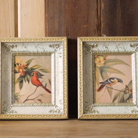 Framed Bird Prints, Set of 2