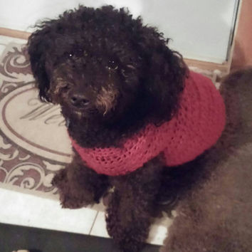 Customize a Cozy Crocheted Dog Sweater