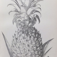Pineapple, Black and White Fruit Print, Antique Picture, Nineteenth century, Home Decor, Interior Design, Bookplate