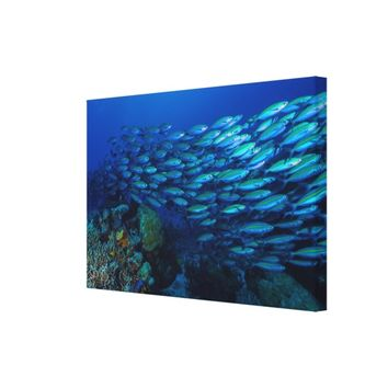 Tropical Fish of the Coral Sea Canvas Print