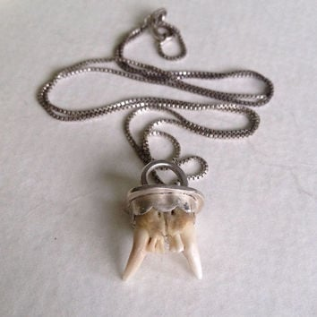 Voracious - Curious Fang Pendant Necklace - Sterling Silver Oddity Necklace - Hunting Relic Pendant - Charivari