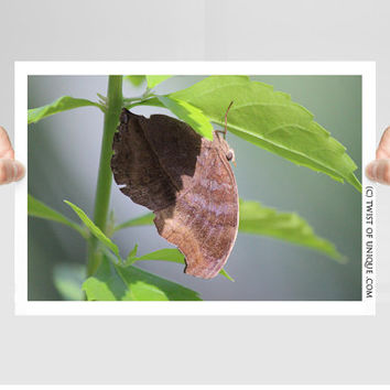 Butterfly Photography/ OPEN EDITION prints / Butterflies photography and Wildlife art / Blue, Black