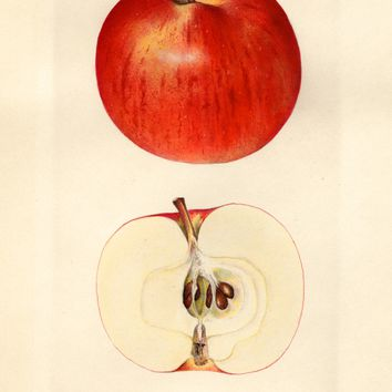 Apples, Joyce (1930)