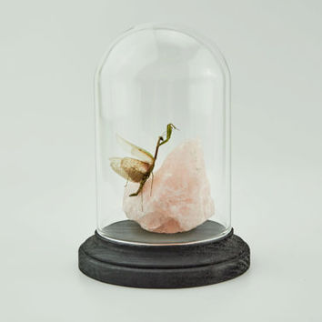 Medium Dome, Praying Mantis, Desk Accessory, Office Decor, Home Decor, Preserved Insect, Rose Quartz, Glass Display, Curiosity, Handmade