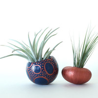 Urchin Shell Air Plant Planter Pair with Air Plants  -  Copper, Navy.  Nocturnal Octopus.