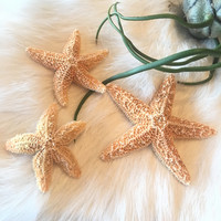Tiny Sugar Starfish