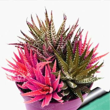 On Sale!! 100 Rare African Cactus Seeds Mixed Succulent Tree Plant Purify Air Bonsai Resistant Heat Easy Care Creative + Gifts