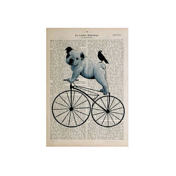 Bulldog on Bicycle Wall Poster 20x30