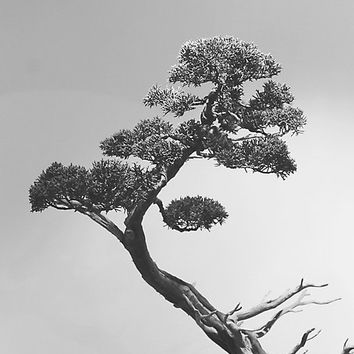 Bonsai Tree Fine Art Photograph, Print, Black and White Nature Photography