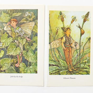 Two Vintage Flower Fairies Pictures by Cicely Mary Barker, Ribwort Plantain Fairy, Jack-by-the-Hedge Fairy