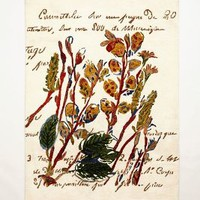 Floriculture Rug by Anthropologie Multi