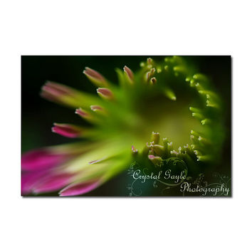 Gerbera Daisy Macro Photography Print Green Pink Greeting Card Coaster To Do List Calendar