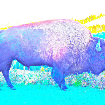 Bison Sticker / buffalo / Yellowstone National Park / Wyoming / Wild West / Original Photography / Gifts For Kids/ Stocking Stuffer