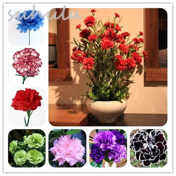 Mixed Colors 100 Pcs Carnation Seeds Perennial Beautiful Flowers Potted Balcony Garden Plants Dianthus Caryophyllus Flower Seed