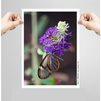 Glass Butterfly Photography/ OPEN EDITION prints / Nature and Wildlife Photography / Purple, Orange, Green, Black, Glass