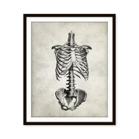 Vintage Anatomy Rib Cage Skeletal Art Print, Skeleton, Human Anatomy 5x7, 8X10, 11x14 Medical Scientific Science Doctor Wall Decor